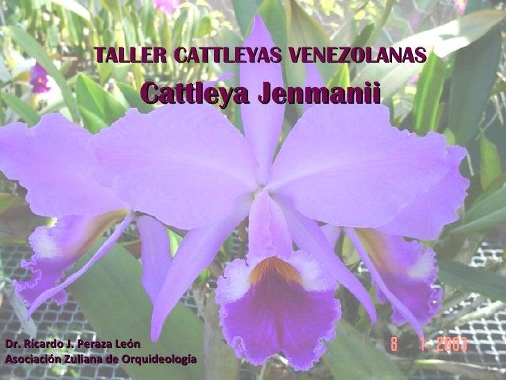 TALLER CATTLEYAS VENEZOLANAS Cattleya Jenmanii Dr. Ricardo J. Peraza León Asociación Zuliana de Orquideología