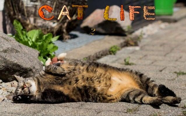 http://judy-cats.blogspot.com http://www.ppsparadicsom.net