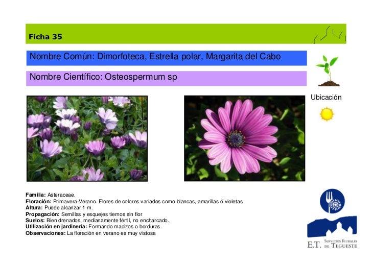 Catalogo De Plantas De Jardin 1