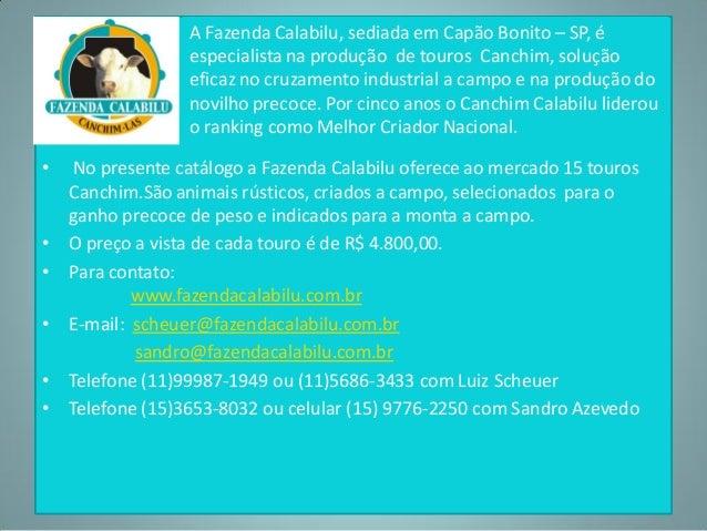 •  •  • • •  • •  A Fazenda Calabilu, sediada em Capão Bonito – SP, é especialista na produção de touros Canchim, solução ...