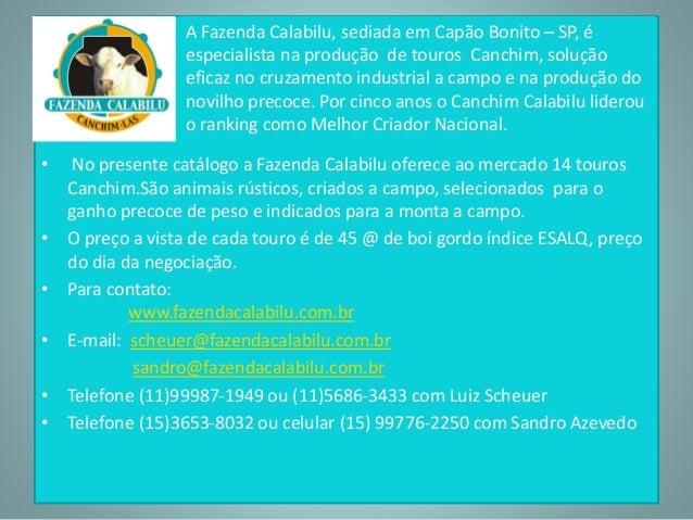•  A Fazenda Calabilu, sediada em Capão Bonito – SP, é  especialista na produção de touros Canchim, solução  eficaz no cru...
