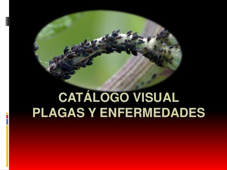 CATÁLOGO VISUALPLAGAS Y ENFERMEDADES