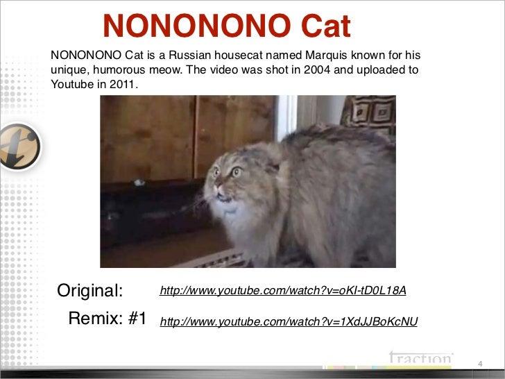 Cat Memes 2011 2012