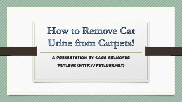 how to get cat urine smell from carpets