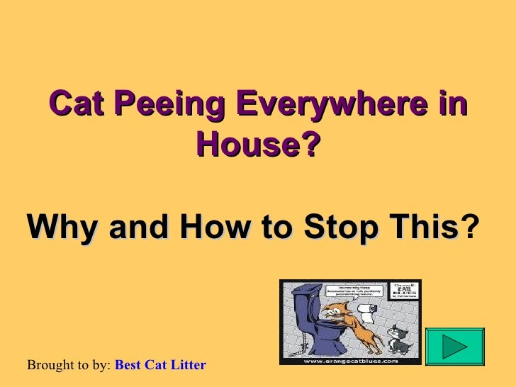 Cat Peeing Everywhere in House? Why and How to Stop This ?