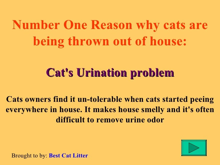 Does Cat Why Pee Everywhere My
