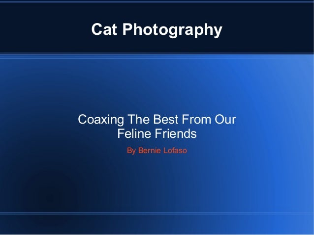 Cat Photography Coaxing The Best From Our Feline Friends By Bernie Lofaso