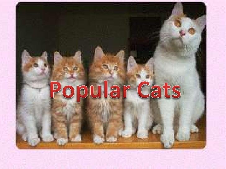 Popular Cats<br />