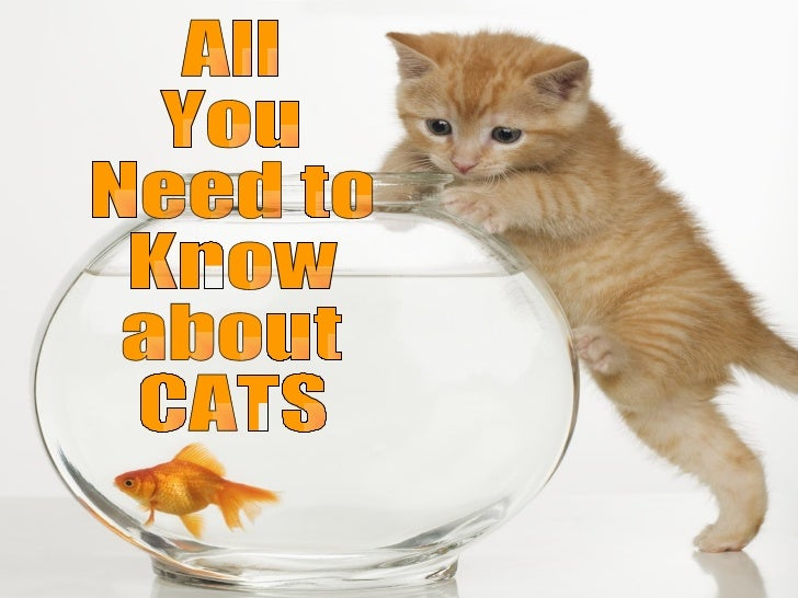 All You Need to Know about CATS