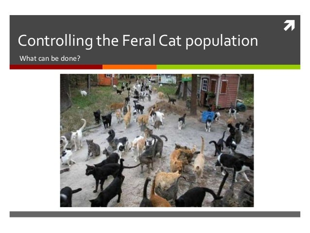 Controlling the Feral Cat population What can be done?