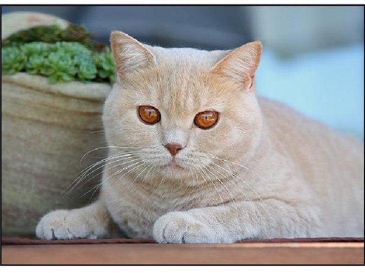Cats, cats & more cats