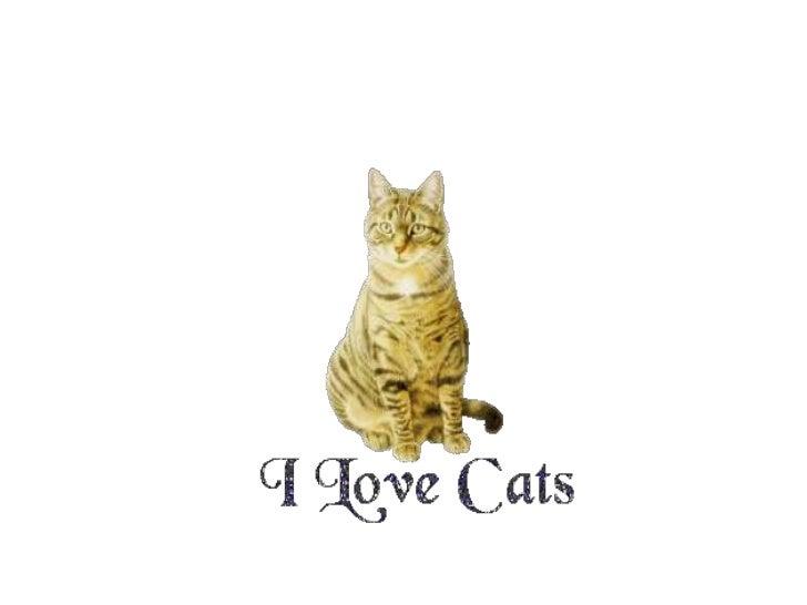 1. Persian cats
