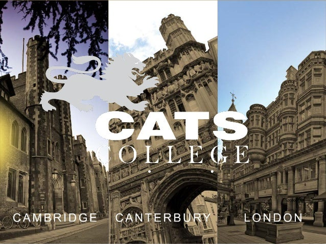 Image result for cats college