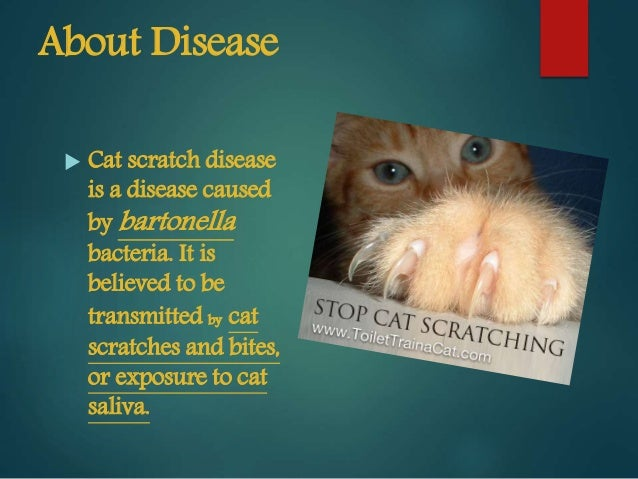 cat scratch disease, Skeleton