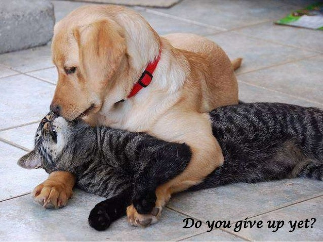 Do you give up yet?