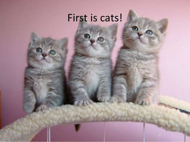 First is cats!