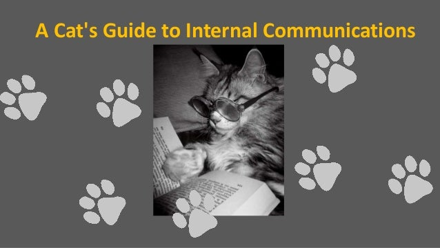 A Cat's Guide to Internal Communications