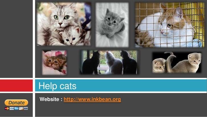 Help catsWebsite : http://www.inkbean.org