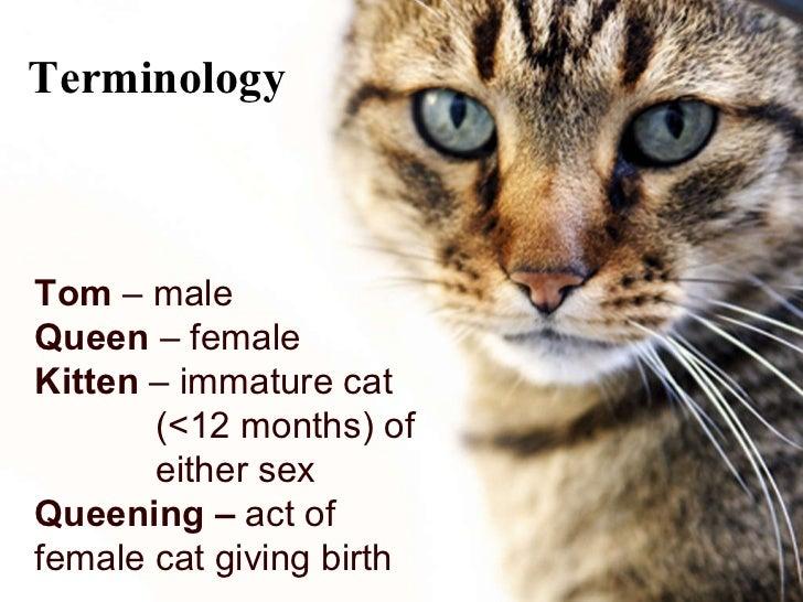 cats i behavior and restraint of cats