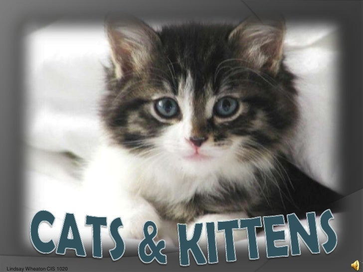 Cats & Kittens<br />Lindsay Wheaton CIS 1020<br />