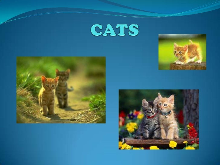 CATS<br />