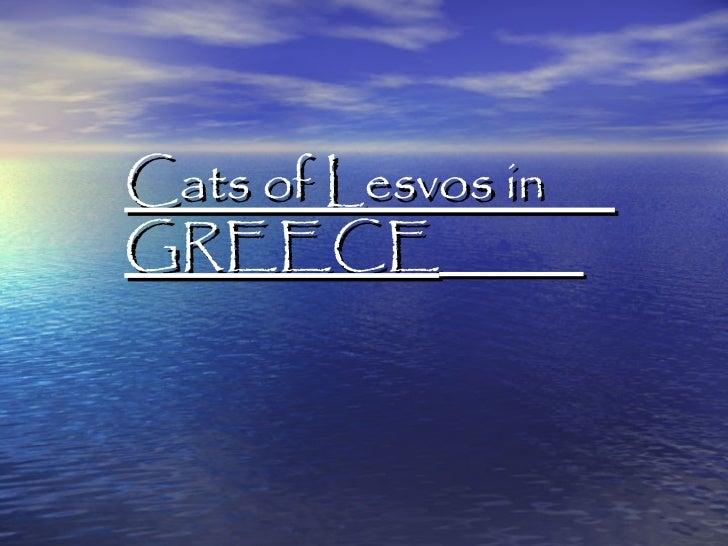 Cats of Lesvos inGREECE