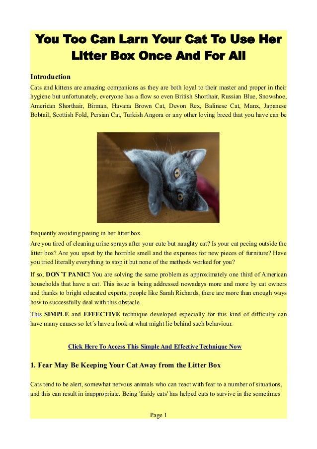 Cat Spraying Site Facebook Com