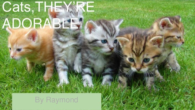 Cats,THEY'RE ADORABLE By Raymond