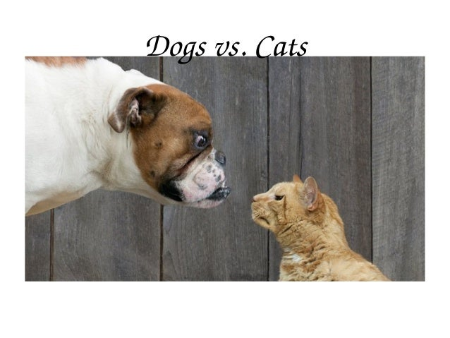 Dogsvs.Cats