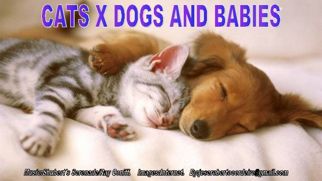 Cats x dogs and babies.jr cordeiro