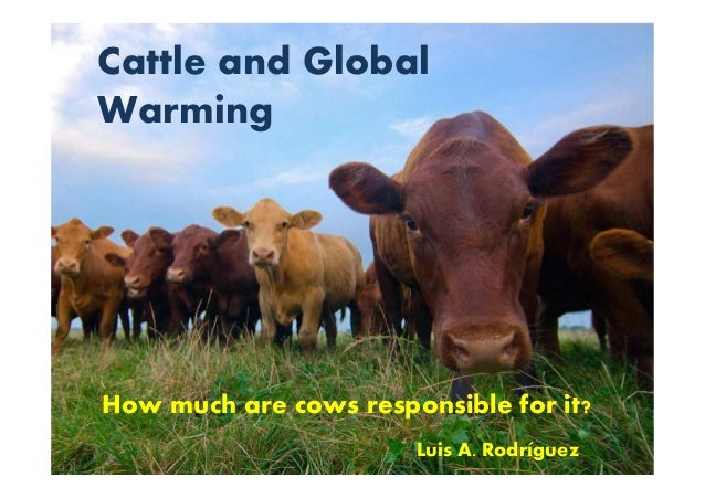 Cattle and Global Warming How much are cows responsible for it? Luis A. Rodríguez