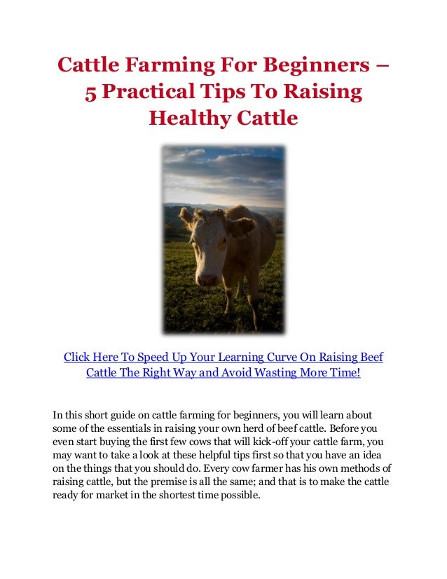 cattle farming for beginners pdf