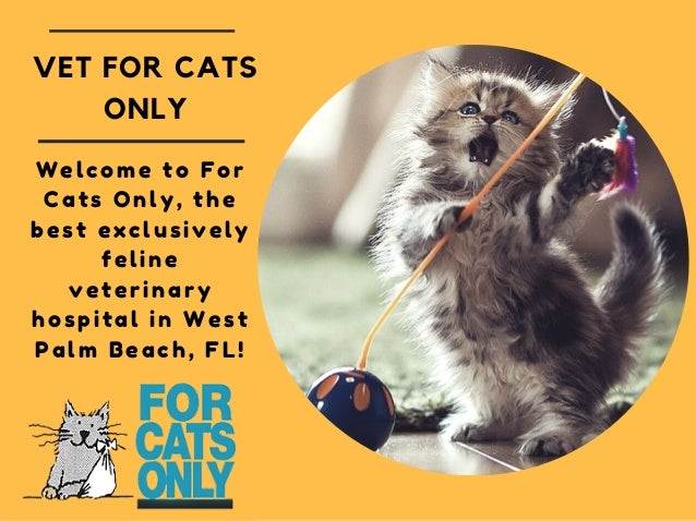 For Cats Only West Palm Beach Fl
