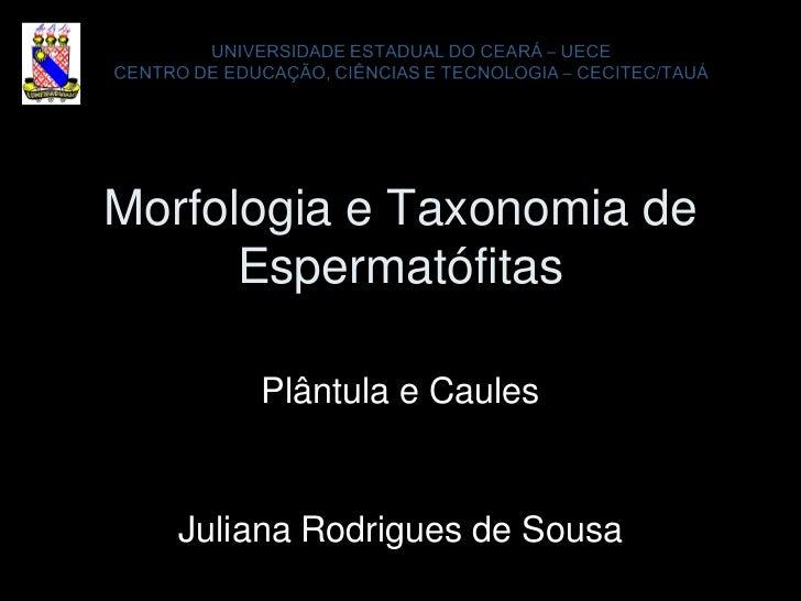 Morfologia e Taxonomia de      Espermatófitas       Plântula e Caules   Juliana Rodrigues de Sousa