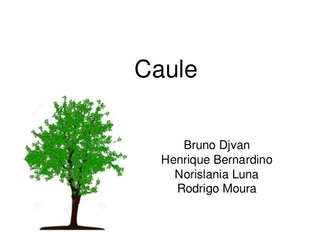 Caule Bruno Djvan Henrique Bernardino Norislania Luna Rodrigo Moura