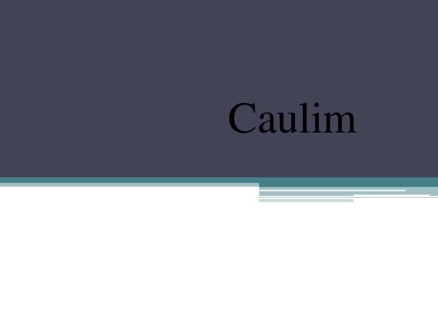 Caulim