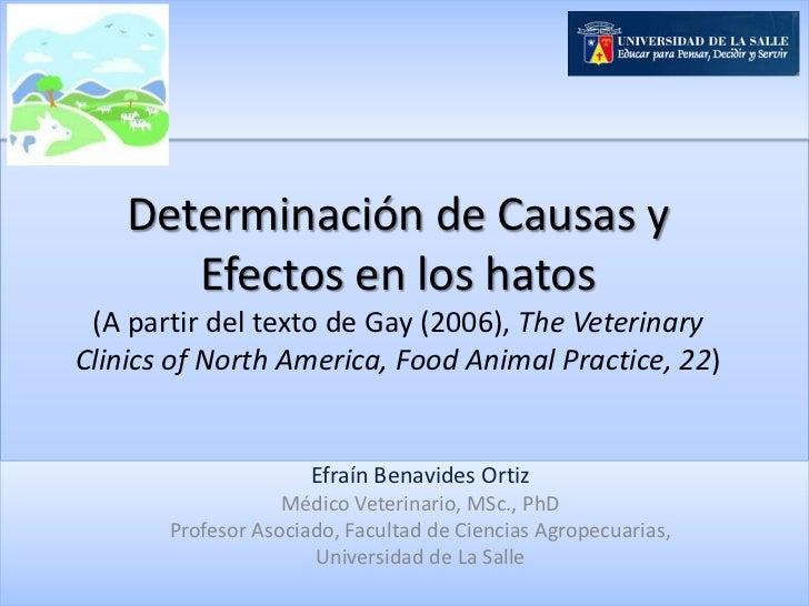 Determinación de Causas y       Efectos en los hatos (A partir del texto de Gay (2006), The VeterinaryClinics of North Ame...