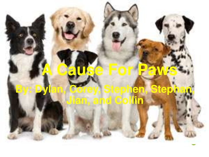 A Cause For PawsBy: Dylan, Corey, Stephen, Stephan,          Jian, and Collin                                 S