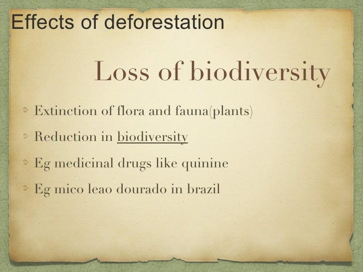Deforestation and biodiversity presentation essay