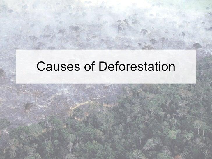 effects of rainforest deforestation