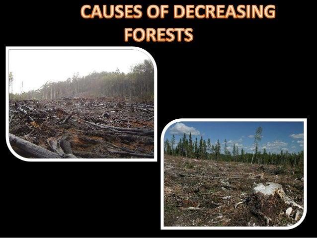 Causes of deforestation