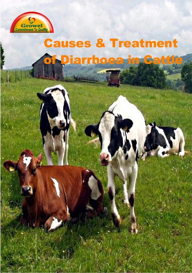 Causes & Treatment of Diarrhoea in Cattle