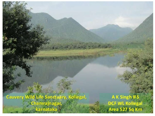 Cauvery Wild Life Sanctuary, Kollegal, Chamrajnagar, karnataka A K Singh IFS DCF WL Kollegal Area 527 Sq Km
