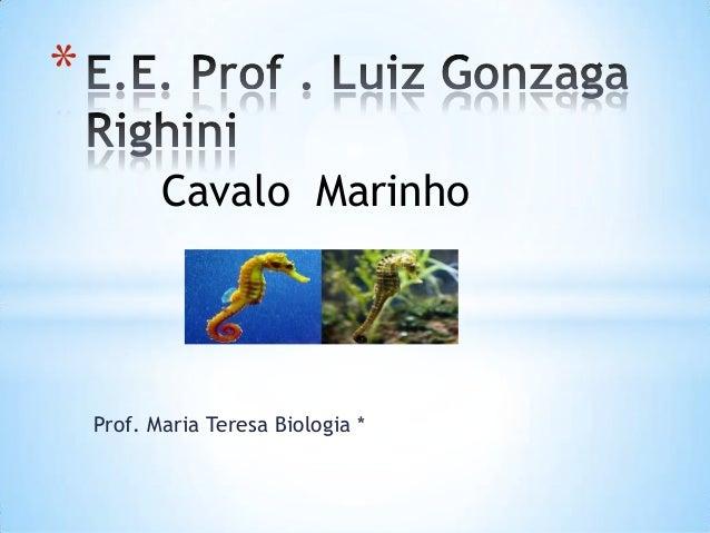 Prof. Maria Teresa Biologia * * Cavalo Marinho