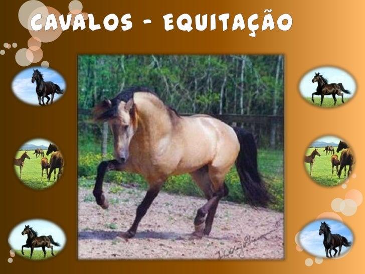 Cavalos - Equitação<br />