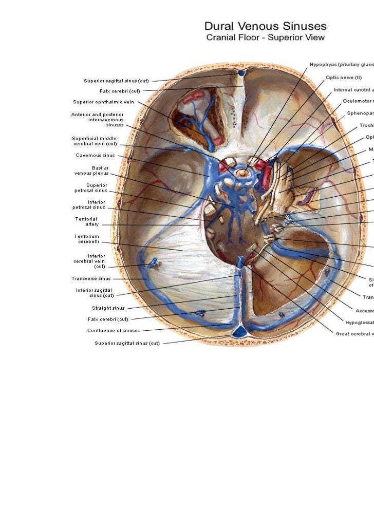 cavernous sinus thrombosis treatment guidelines