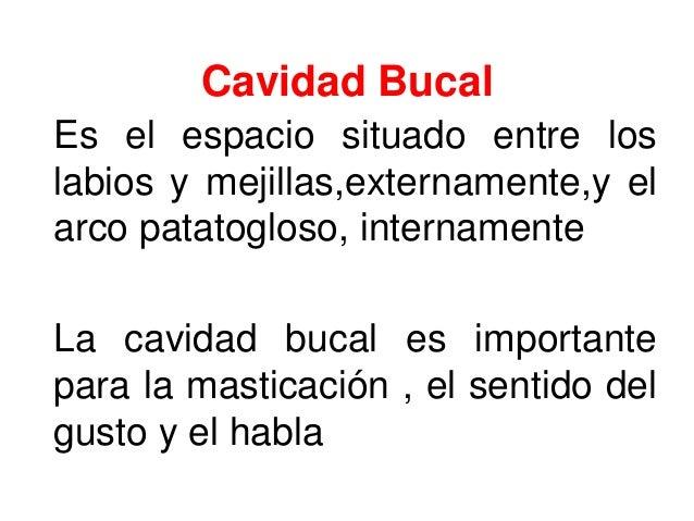 Cavidad Bucal Es el espacio situado entre los labios y mejillas,externamente,y el arco patatogloso, internamente La cavida...