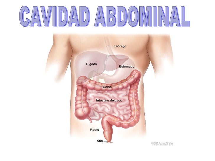 Cavidades posicion anatomica