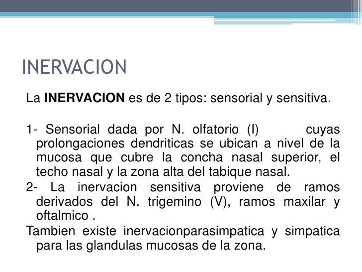 2/3 inf. mucosa forman área respiratoria, y 1/3 área olfatoria.
