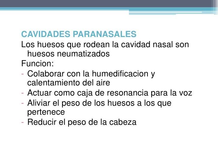 PARED LATERAL<br />*proceso frontal del hueso maxilar<br />*el hueso lagrimal<br />*la masa lateral del etmoides con sus c...